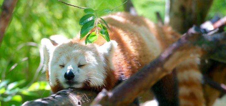 Mozilla pourrait passer à une sorte de Firefox Premium. Mais quand c'est la dèche, tu fais ce qu'il faut pour faire bouillir la marmite.